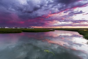 Purple Rain - by Tony Baldasaro of Stratham - awarded Best of Show